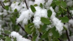 У Харкові випав сніг (відео)