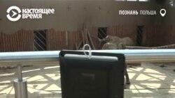 Робот-экскурсовод в польском зоопарке (видео)