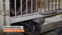 Новосибирский цирк выбросил на улицу четвероногих артистов-пенсионеров