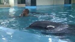 Бійці і дельфіни: боротьба з посттравматичним синдромом по-новому