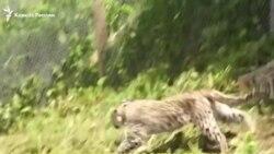 Животные и люди в Чечне
