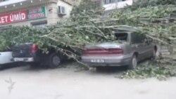 Hövsanda ağac avtomobillərin üstünə aşdı