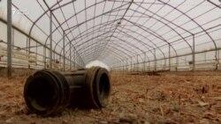 Бесхозные теплицы в Кызылорде