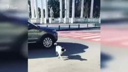 """Четвероногий дорожный """"патруль"""""""