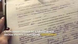 Поиск наркотиков в посылке для штаба Навального в Томске