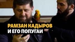 Кадыров получил премию за видео с попугаями