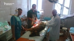 Caring For Combatants And Canines: Ukraine's Doctors Do It All