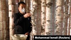 Razul Rezaj gombát szed kabuli farmján, Afganisztánban, 2021. február 28-án.