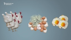 Uzbek Eggonomics