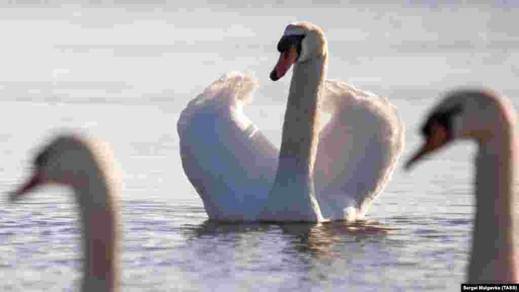 За словами Литвиненко, водоплавні птахи – одні з найбільш паразитарно небезпечних, тобто, заражені гельмінтами та можуть служити джерелом зараження дітей і дорослих