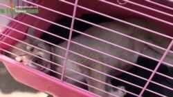 Державі байдужа доля безпритульних тварин – волонтер
