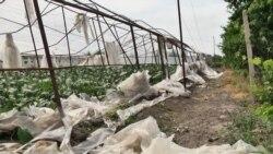 Երեկվա քամու ու կարկուտի հետևանքով վնասներ է կրել Արմավիրի 18 բնակավայր
