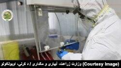آزمایشگاه بیماریهای حیوانی که توسط وزارت زراعت ساخته شده است