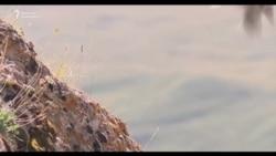 Бийик тоолордогу кыргыз берметтери