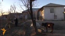 Рубль дағдарысы тәжік ауылына да әсер етті