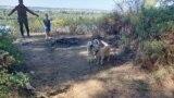 Видео про собак в Сибири