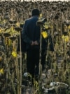 RUSSIA -- A migrant worker from Uzbekistan walks on a sunflower field near a tent camp in the Kinel District of the Samara region, September 22, 2020