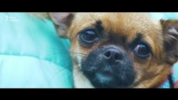 Марш за права животных в Киеве (видео)
