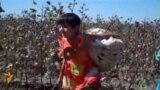 Өзбекстанның мақта алқаптарындағы балалар