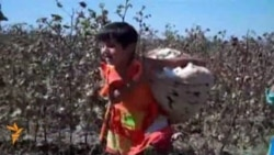 Kids At Work In Uzbekistan's Cotton Fields