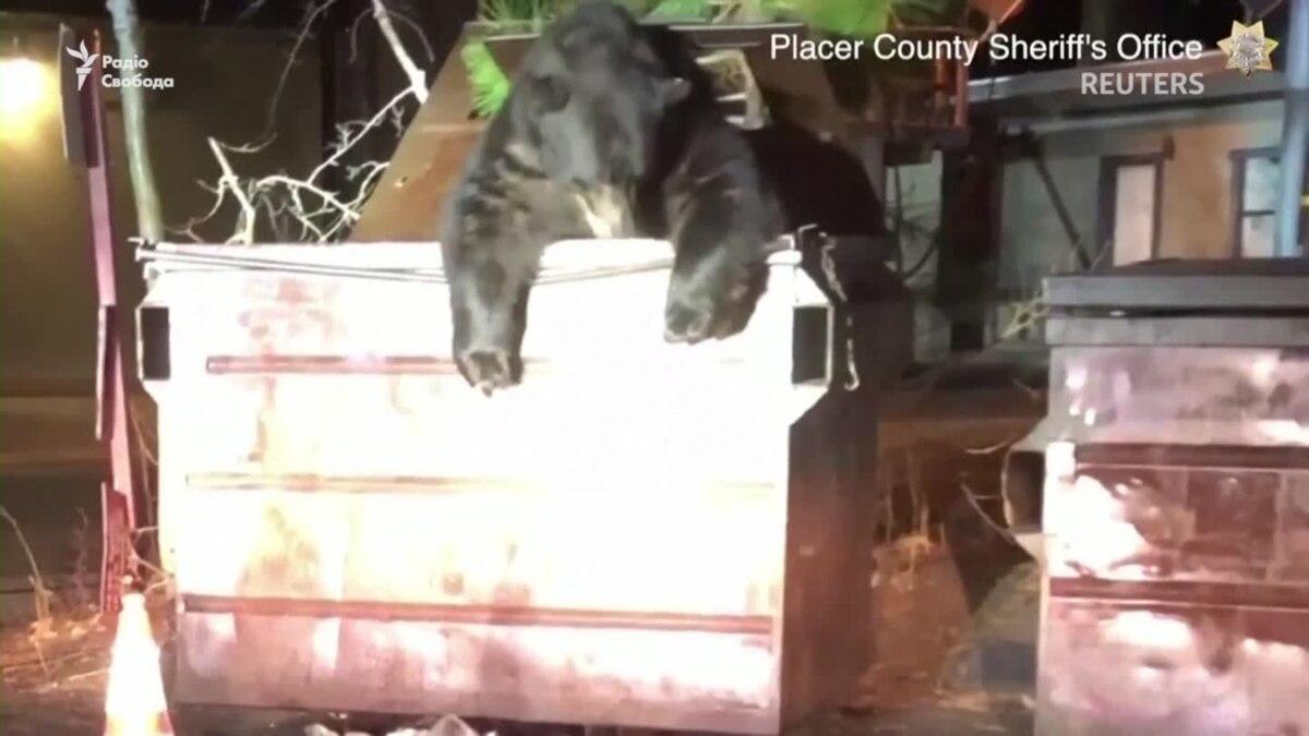 Счастливое освобождение. В США полицейские помогли медведю выбраться из контейнера для мусора – видео