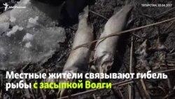 Массовая гибель рыбы на Волге в Татарстане