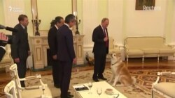 Владимир Путин и Курилы