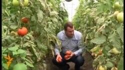 Moldoveanul care exportă legume în UE