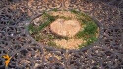 На Хрещатику порубали дерева