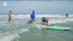 Как собак учат заниматься серфингом