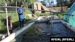 ایجاد نخستین فارم ماهی در ولایت بامیان