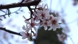 Во власти «мертвого сезона»: весна в Гурзуфе (видео)
