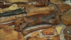 У кримській печері знайшли останки доісторичних тварин (відео)