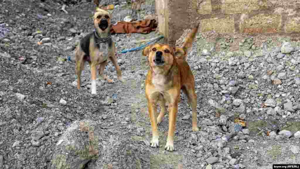 Некоторые оставленные дома ныне охраняют лишь собаки