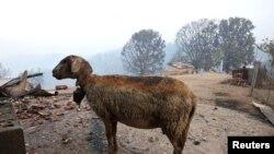 Від пожеж у Греції постраждали тварини