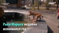 Рысь Марыся - очень дружелюбный хищник