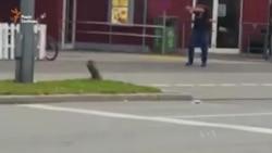 Очевидець зняв на відео стрілянину у Мюнхені