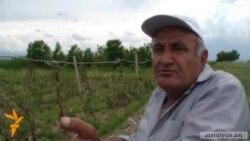 Կարկտից տուժած գյուղացիների վարկերը կազմում են շուրջ 9 մլրդ դրամ