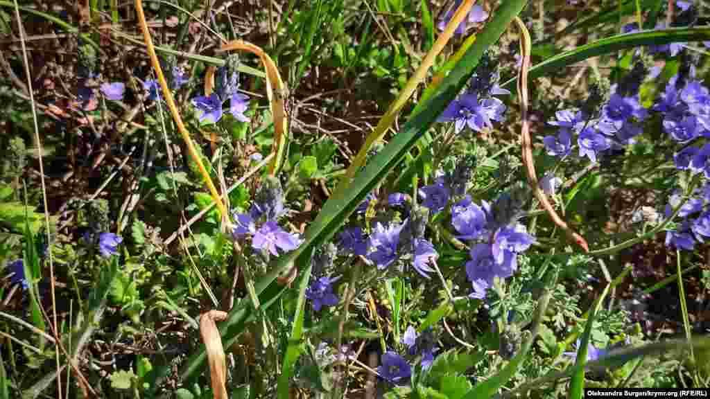 Фіолетові квіти біля каньйону