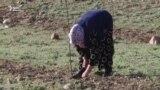 Баткенцы решили никуда не уезжать, а разбивать сады на родной земле