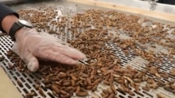 Afghanistan Opens $6 Million Pine-Nut Factory As Sales To China Boom
