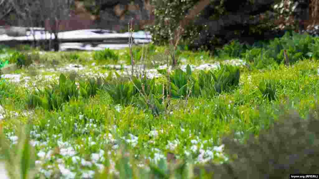Дачні квіти чекають сонячного тепла