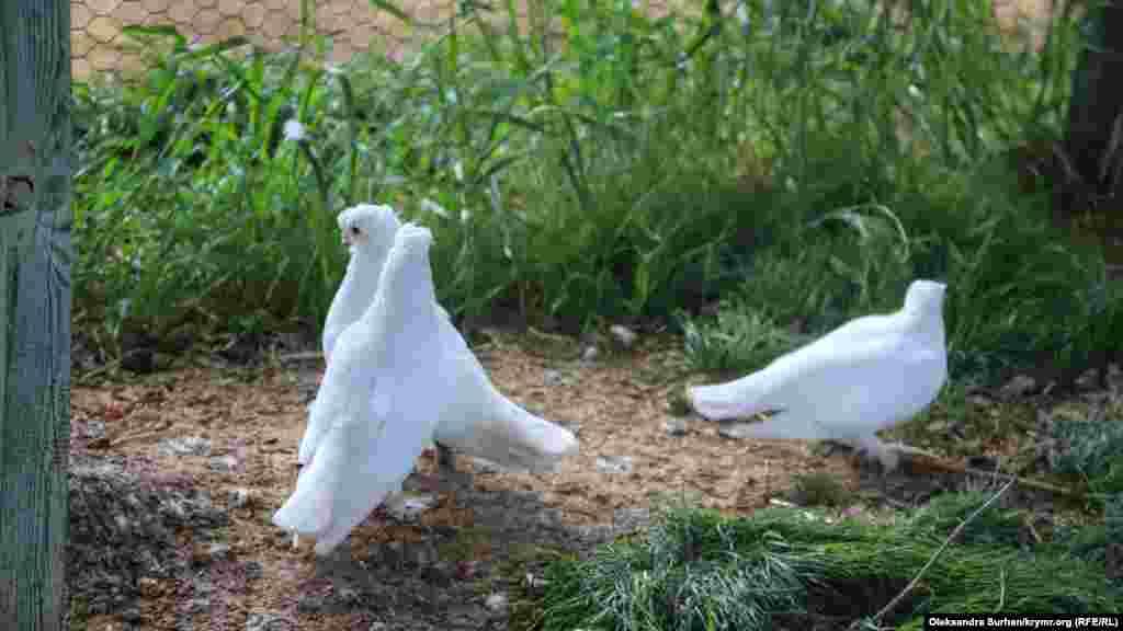 В парке есть не только кролики, но и несколько видов голубей