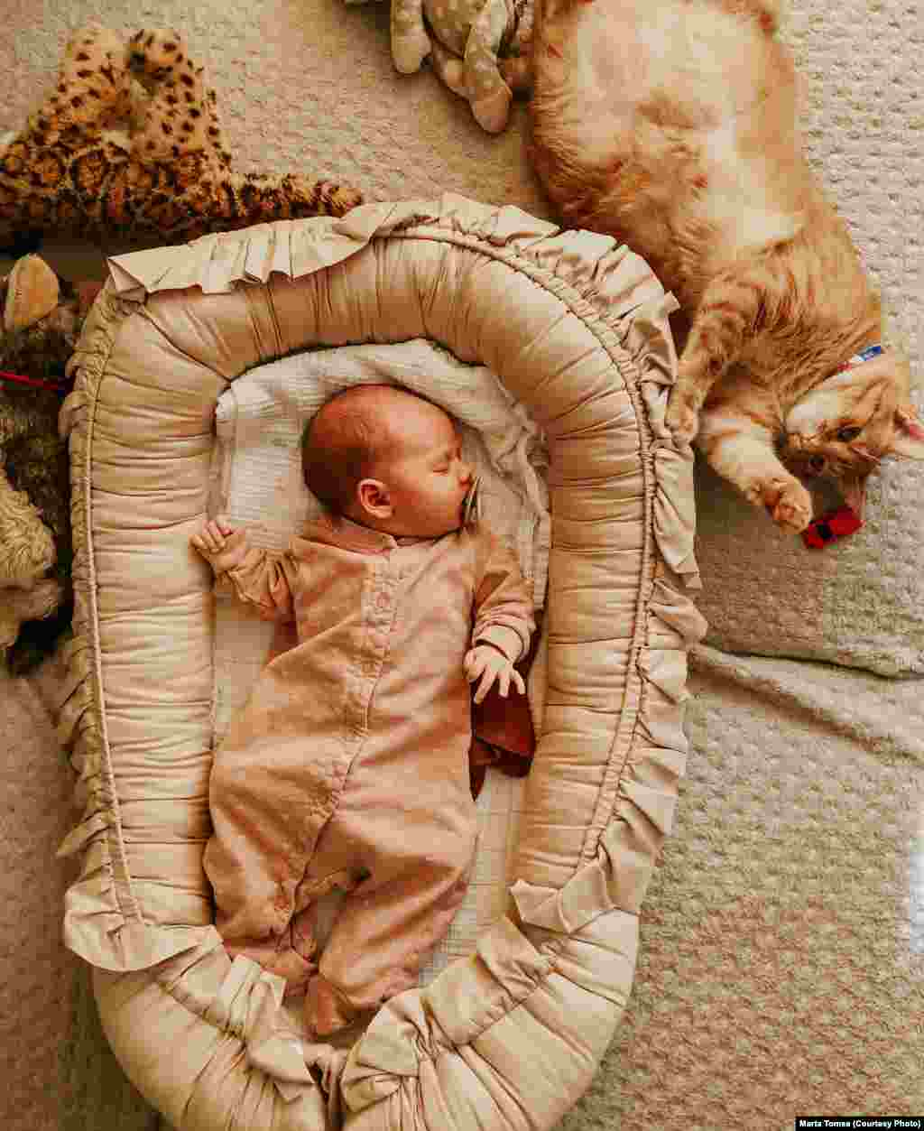 A kis Nora Cristescu mamája profi fotós, ő készítette ezt a képet. A cicájuk is profi modell, természetesen.
