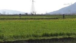 د هند – پاکستان له لانجې د ټماټرو نرخونه زښته لوړ ختلي