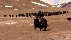 Оогандык 77 кыргыз Тажикстанга кире качты | БҮГҮН АЗАТТЫКТА | 14.07.21