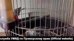 Украденная клетка с волнистыми попугайчиками