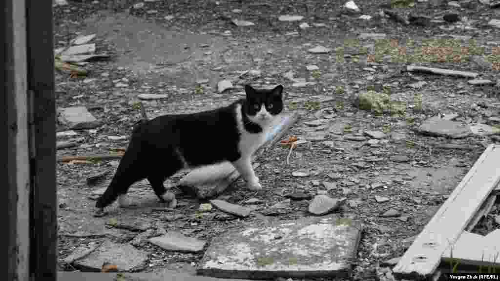 Кот замер неподвижно при виде незнакомца