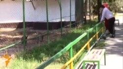 Рӯзи аввали зиндагии кенгуруҳои чехӣ дар Душанбе