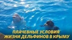 Пленники в Крыму: российский закон убивает дельфинов